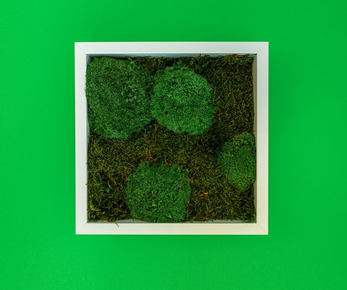 Mechový obraz - bílý rám